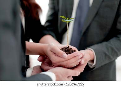 Male and female business partners nurturing a new plant