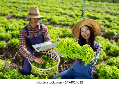 Male and female farmers are checking their vegetables.(Modern concept)