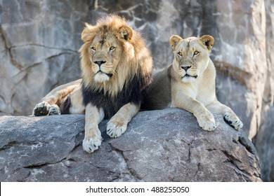 Male and Female Lion Sitting on a Rock