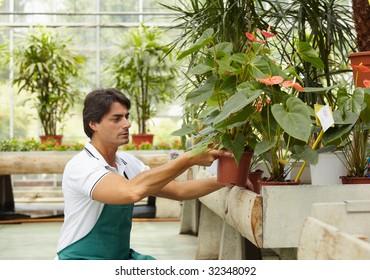 male florist arranging plants in flower shop