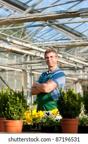 Male florist or gardener in flower shop or nursery greenhouse