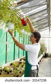 male florist watering plants in flower shop