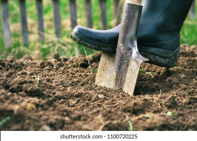 Male foot wearing a rubber boot digging an earth in the garden with an old spade close up