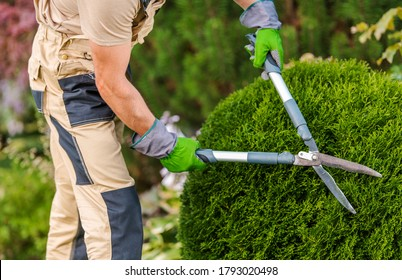 Male Gardener Pruning Decorative Bushes With Trimming Shears In Private Yard.