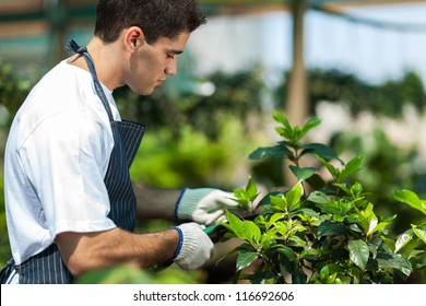 male gardener working in garden
