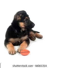 Male German Shepherd puppy chewing on toy while laying down