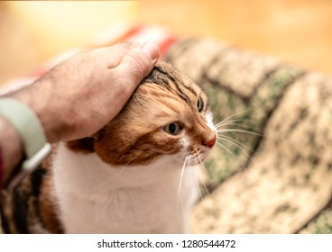 Male hand carresing the lovable fluffy friend cat