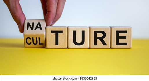 Male hand flips wooden cubes and changes the inscription 'culture' to 'nature' or vice versa. Beautiful yellow table, white background, copy space.