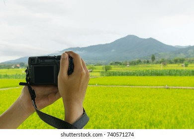 Male hand grap the camera shooting beautiful rice field or farm with mountain background scenery.