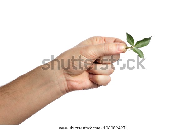 Male hand with green leaf, on white background, isolate. Close-up. Copy the stand.