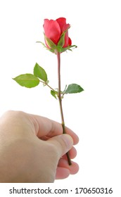 Male hand holding a beautiful red rose, isolated on white  background