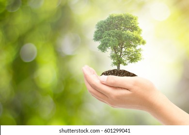 Male  hand holding the tree is grown on a green background nature  / care ideas and protect the environment.