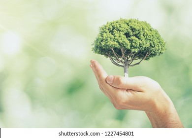 Male hand holding tree on blurry green outdoor bokeh background. Eco  safety concept