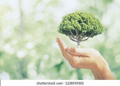 Male hand holding tree on blurry green outdoor bokeh background. Eco friendly concept