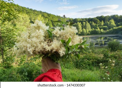 The male hand holds a bouquet of medicinal herbs: mint and meadowsweet. At a background the mountain lake and hills covered with the wood is visible. The herbalist collects salutary herbs in the summe