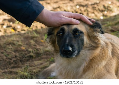 Male hand is lying on the dog's head with sad eyes