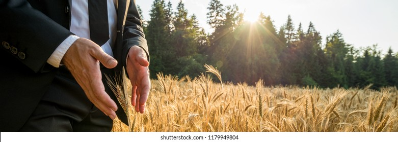 Male hands in elegant suit making protective gesture around a golden wheat ear growing in beautiful cereal field. Conceptual of alternative healing and energy.