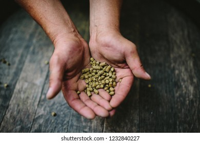 Male hands with granulated hop on a dark background horizontal