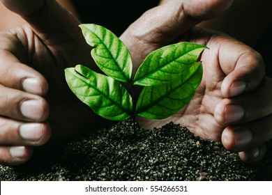 male hands transplanting young plant growing on soil /protect nature and environment concept