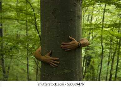 Male hands wrapped around the trunk of an old beech tree in a summer forest.