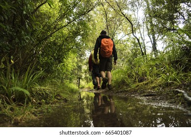 Male Hiker with Orange Backpack Hiking Through New Zealand Rainforest with Reflection in Puddle