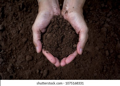 Male holding soil in the hands for planting. Ecology concept.