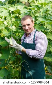 Male  horticulturist in apron  working with  marrow seedlings in sunny greenhouse