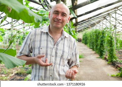 Male horticulturist standing near  cucumber seedlings in  hothouse