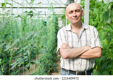 Male horticulturist standing near   pea and soy seedlings in  hothouse
