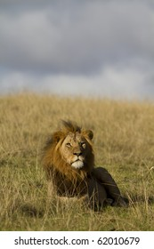 Male lion relaxes under blue sky
