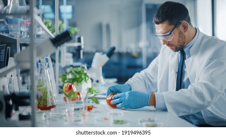 Male Microbiologist in Safety Glasses Examining a Lab-Grown Tomato. MMicrobiologist Working on Molecule Samples in Modern Food Science Laboratory with Technological Equipment.