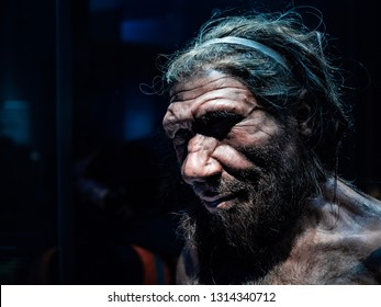 Headshot of male Neanderthal replicate exhibited in Natural History Museum, London. Shot on 13feb2019.