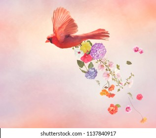 Male Northern Cardinal Flying with flowers ,watercolor painting