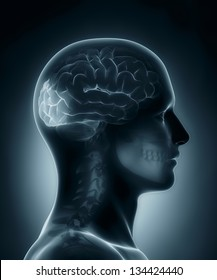 Male Occipital lobe medical x-ray scan