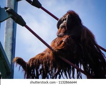 male orangutan swinging to platform