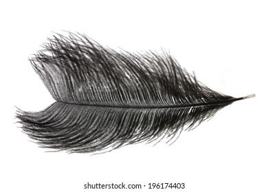 a male Ostrich feather isolated on white