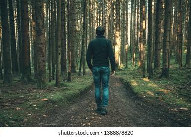 Male person walks alone in sunny forest landscape.