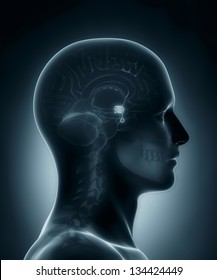 Male Pituitary gland medical x-ray scan