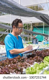 Male scientist Researcher or Farmer Record Data Statistic of Fresh Green Oak Salad Lettuce Plantation on Chart Board as Hydroponics organic Agriculture Farming System Cultivation.