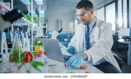 Male Scientist Working on a Laptop Computer and Picking up a Half-Cut Lab-Grown Tomato in a Dish. Microbiologist Working on Molecule Samples in Modern Laboratory with Technological Equipment.