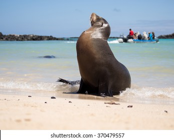 Male sea lion on the beach with tourists in the background, Santa Fe Island, Galapagos