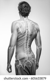 Male skeleton illustration