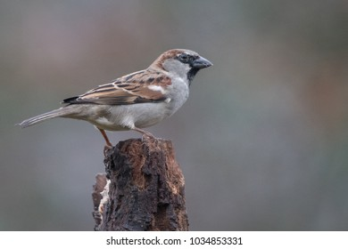 Male sparrow standing on a tree