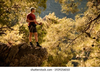 male tourist with trekking poles stands on edge of cliff surrounded by green pine branches