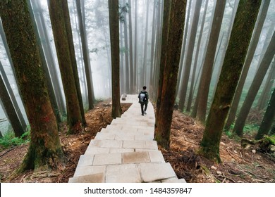 Male tourist walking down the stone stair in the Japanese Cedar Forest with fog in Alishan National Forest Recreation Area in winter in Chiayi County, Alishan Township, Taiwan.