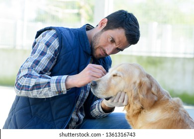 Dog Ear Infection Images, Stock Photos & Vectors | Shutterstock