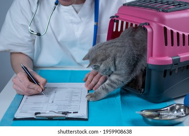 Male veterinarian takes notes on health check of gray Scottish Straight kitten in animal carrier on examination table in clinic. Veterinarian wiriting on clipboard near tabby cat. Check health animal.