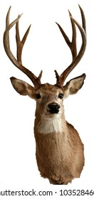 Male white-tailed deer taxidermy objects isolated