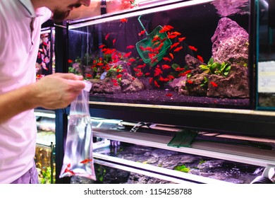 Male worker in aquarium shop catching fishes with net for customer.