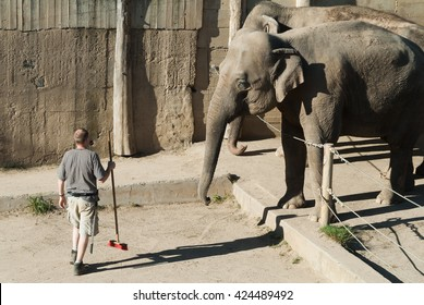Male zoo keeper with broom cleaning elephant outlet with two adult elephants